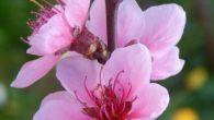 9 APRILE – GIOVEDI' SANTO Ore 18,00 S. Messa della Cena del Signore Non ci sarà la lavanda dei piedi, nè l'altare della Reposizione. 10 APRILE – VENERDÌ SANTO Ore […]